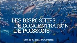 Greenpeace thon