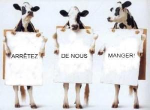 Vaches végé